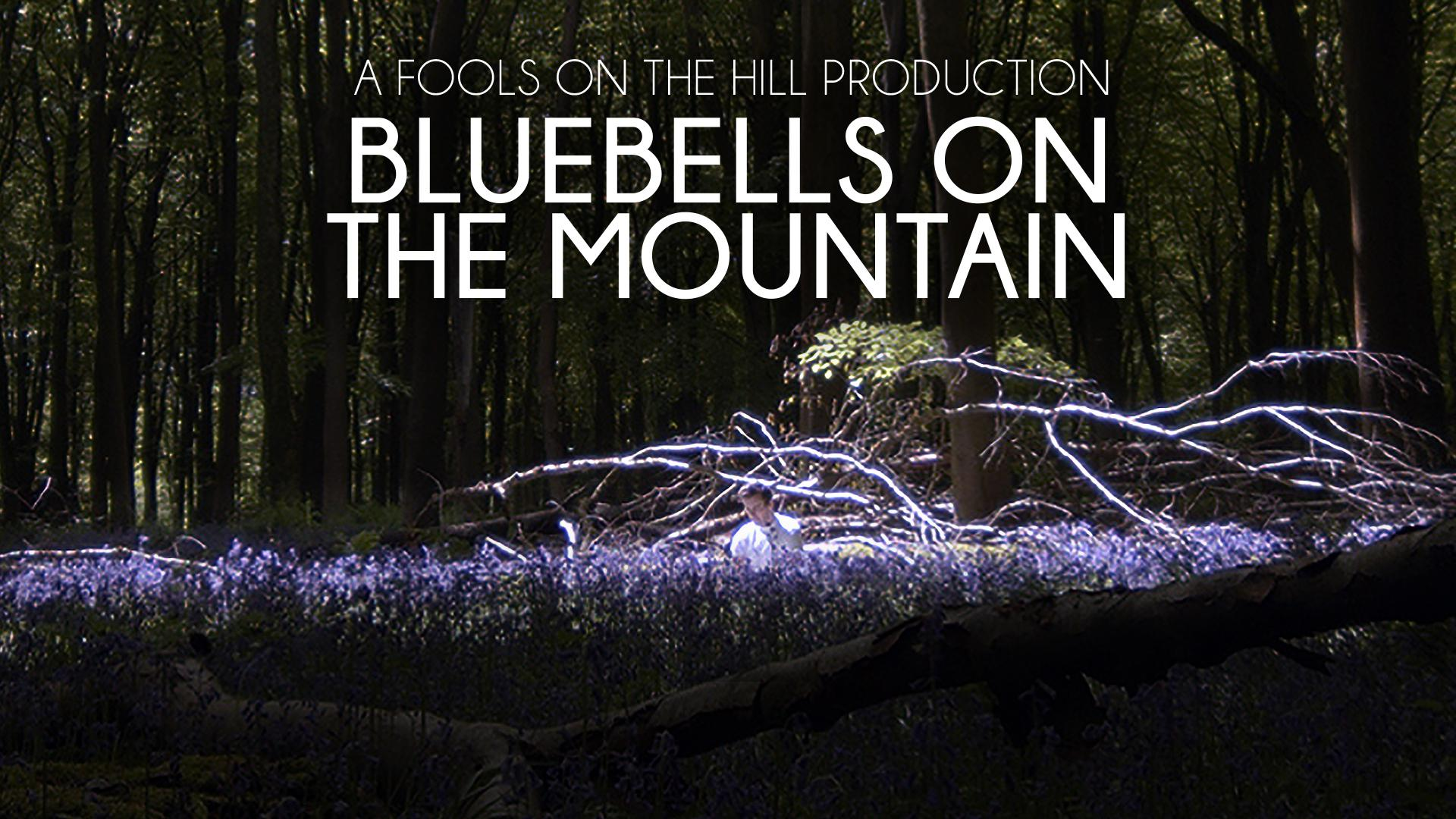 Bluebells on the Mountain