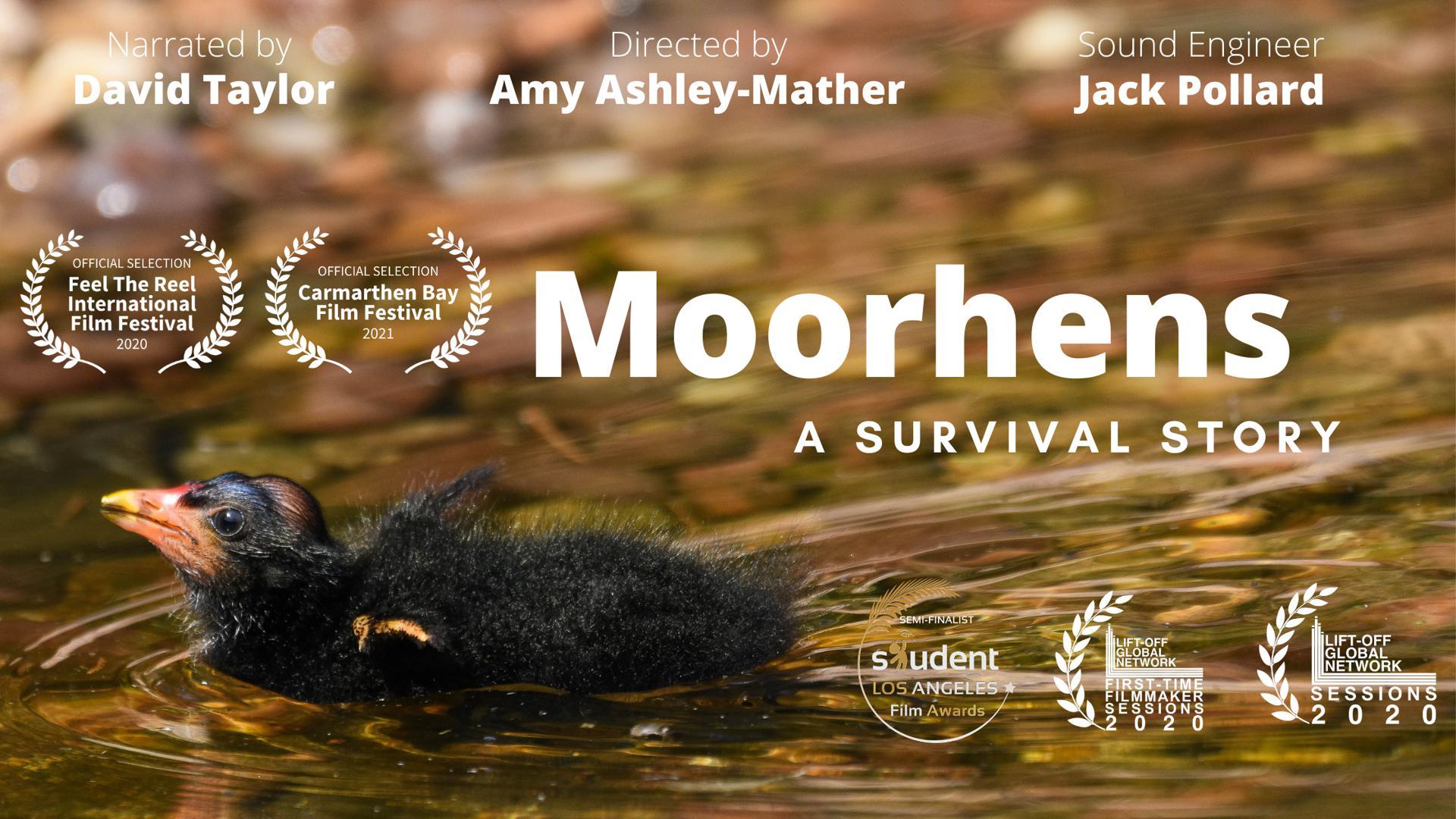 Moorhens: A Survival Story